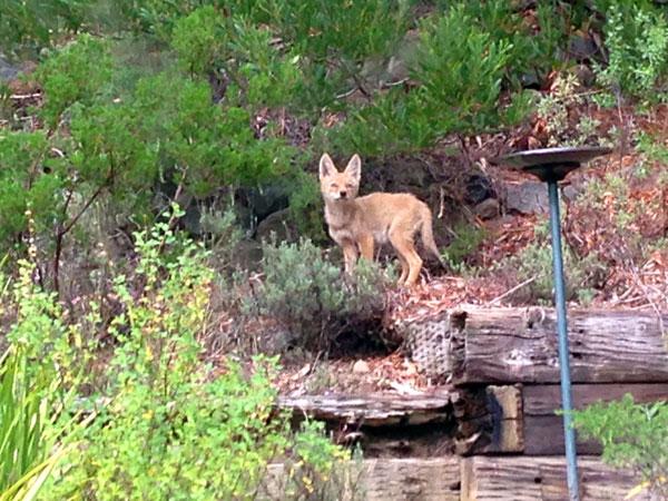 Foxy31_web